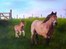 Paarden, in opdracht.  40 x 30