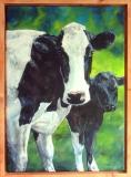 Twee koeien  50 x 70