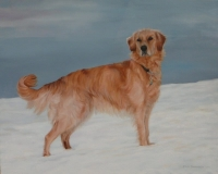 Golden retriever, in opdracht