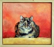 Kat in opdracht.  35 x 30