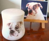 Urn bulldog, beschildering in opdracht.