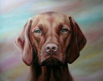 Vizsla, hond in opdracht.  50 x 40
